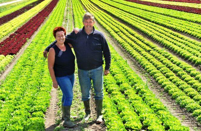Salat Regionale Produkte aus dem Saarland. Blattsalat aus Saarlouis von Morguet